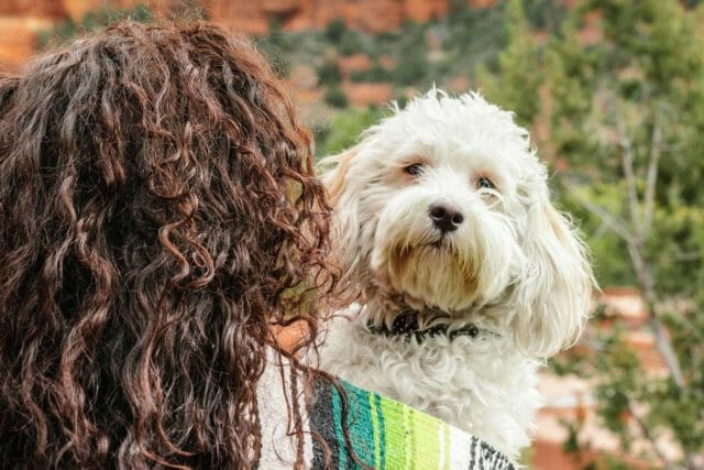 Sedona Pet Friendly Resort