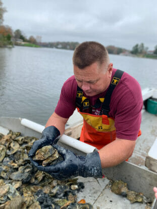 Person on boat holding freshly harvested oysters