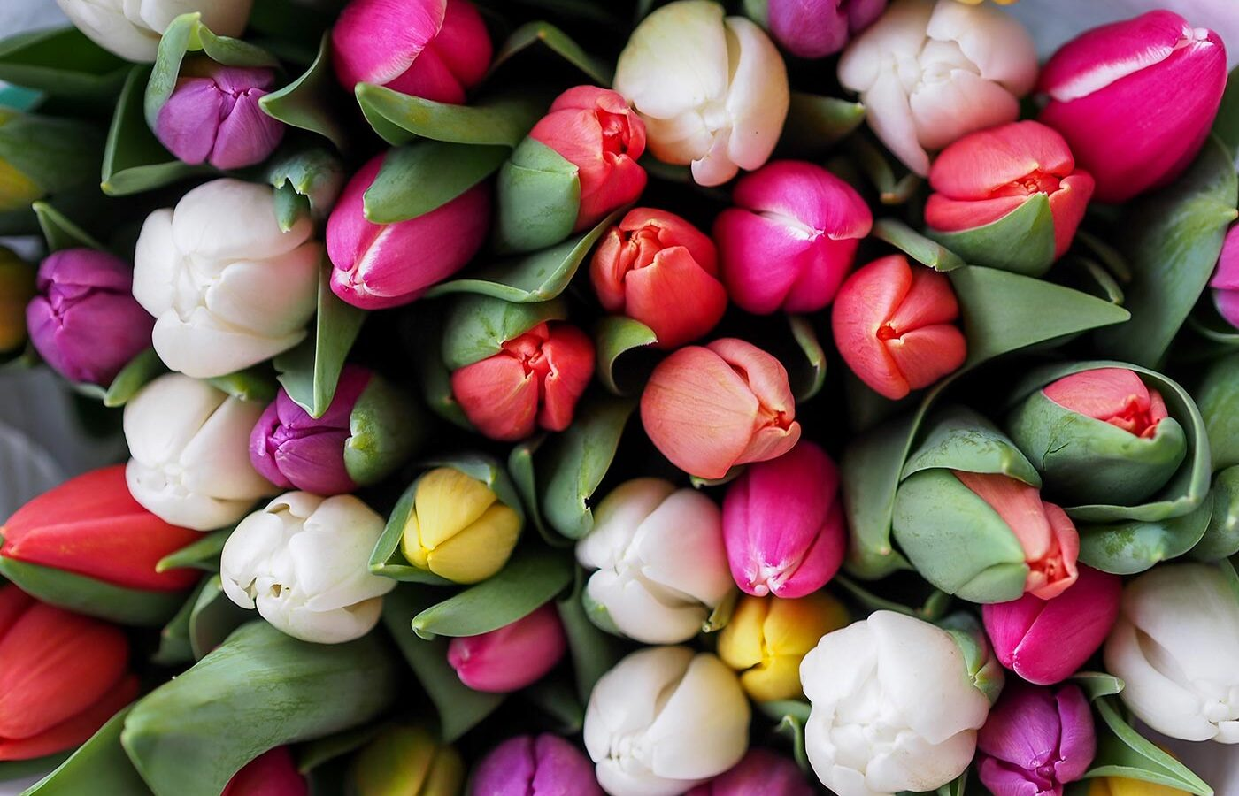 bouquet of spring tulips