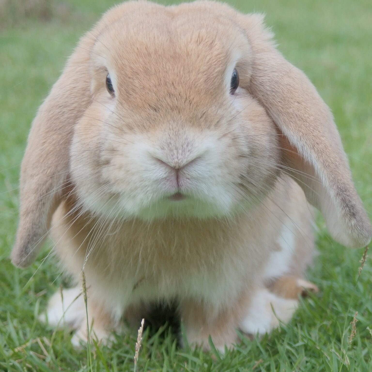 close up photo of a bunny